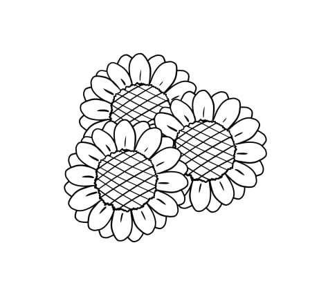 drawing sunflower step 4