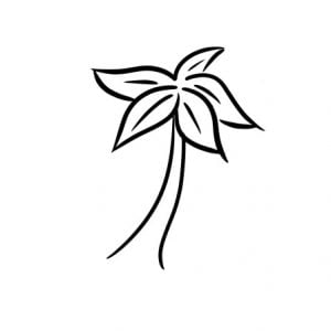 how to draw a palm tree step 3