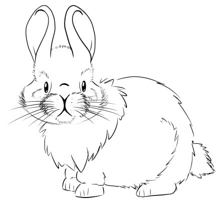 how to draw a realistic bunny step 3