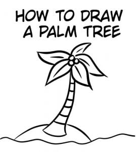 palm tree cover